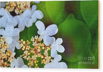 Wood Print featuring the photograph Sweet And Sour by Darla Wood