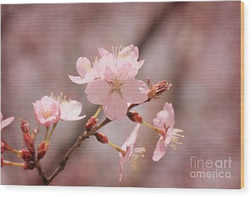 Sweet Blossom Wood Print by LHJB Photography