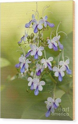 Sweet Butterfly Flowers Wood Print