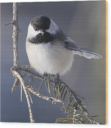 Sweet Chickadee Wood Print by John Kunze
