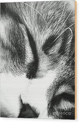 Wood Print featuring the photograph Sweet Dreams by Jacqueline McReynolds