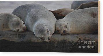 Sweet Dreams Seals Wood Print by Ruth Jolly