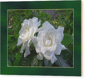 Sweet Gardenia Wood Print by Ginny Schmidt