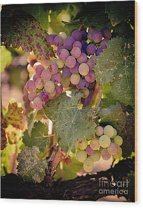 Sweet Grapes Wood Print