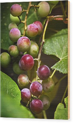 Sweet Grapes Wood Print by Christina Rollo