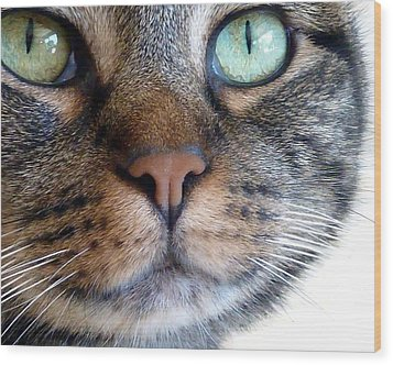 Sweet Green Eyes Wood Print by Patricia Strand
