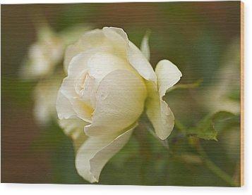 Sweet Home Rose Wood Print by Nick  Boren
