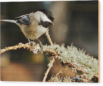 Sweet Little Chickadee Wood Print