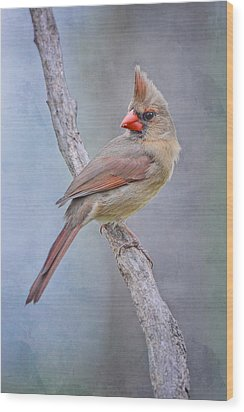 Sweet Little Lady Redbird Wood Print by Bonnie Barry