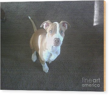 Sweet Nala Wood Print by Jeff Pickett