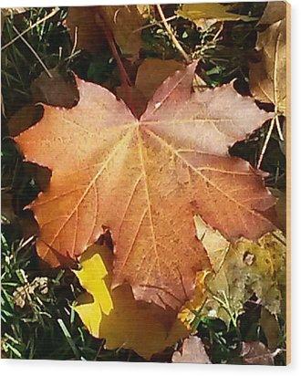 Sweet Norwegian Fall Wood Print