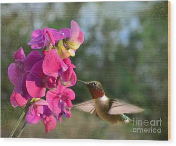 Sweet Pea Hummingbird Wood Print by Debbie Portwood