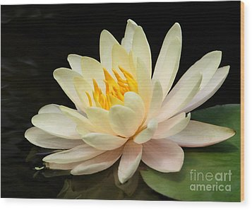 Sweet Peach Water Lily Wood Print by Sabrina L Ryan