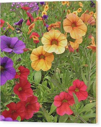 Sweet Petunias Wood Print