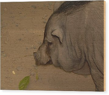 Wood Print featuring the photograph Sweet Pig by Victoria Lakes