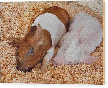 Sweet Piglets Nap Art Prints Wood Print by Valerie Garner
