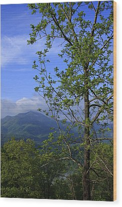 Wood Print featuring the photograph Sweet Springtime On The Blue Ridge Parkway Nc by Mountains to the Sea Photo