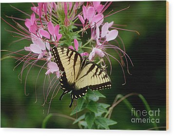 Sweet Swallowtail Wood Print by Living Color Photography Lorraine Lynch