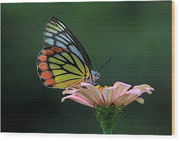 Delicate Beauty Wood Print