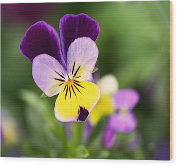 Sweet Violet Wood Print by Rona Black