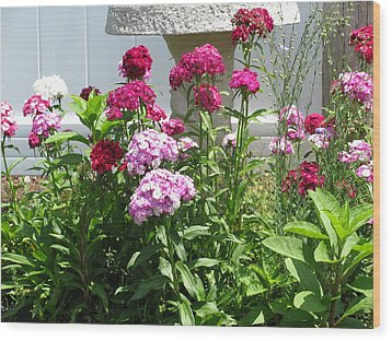 Wood Print featuring the photograph Sweet William Flowers by Margaret Newcomb