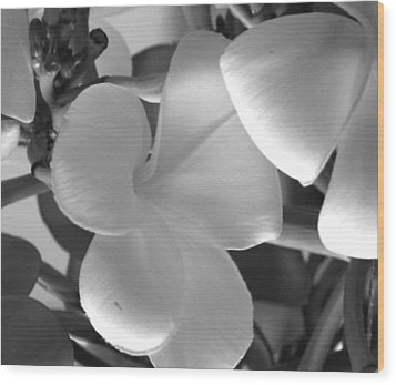 Wood Print featuring the photograph Sweetness by Karen Nicholson