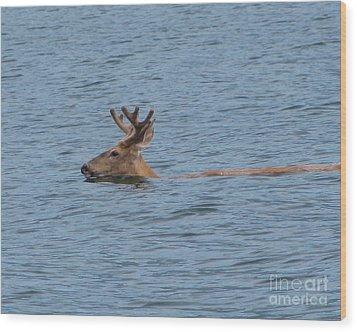 Swimming Deer Wood Print by Leone Lund