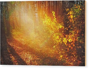 Swimming In Golden Light Wood Print by Jenny Rainbow