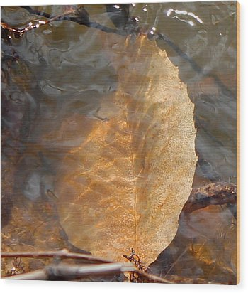 Wood Print featuring the photograph Swimming Leaf by Candice Trimble