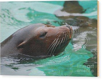 Swimming Sea Lion Wood Print by DejaVu Designs