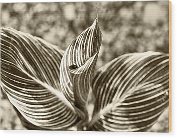Swirls And Stripes Wood Print