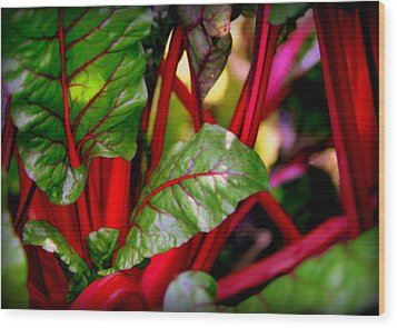 Swiss Chard Forest Wood Print by Karen Wiles