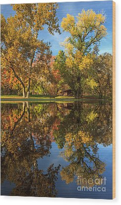 Sycamore Pool Reflections Wood Print by James Eddy