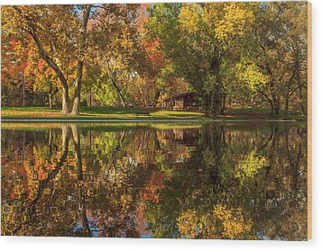 Sycamore Reflections Wood Print