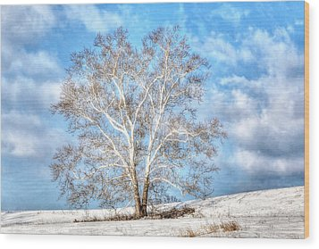 Sycamore Winter Wood Print by Jaki Miller