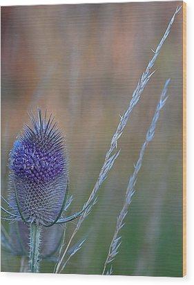 Symbol Of Scotland Wood Print