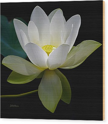 Symbolic White Lotus Wood Print