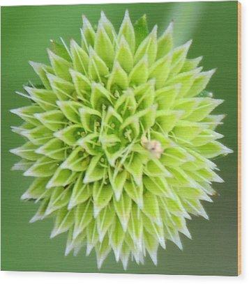 Symmetry In Green Wood Print by Julie Cameron