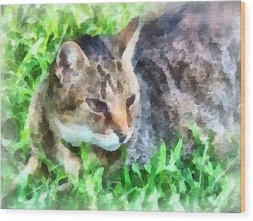 Tabby Cat Closeup Wood Print by Susan Savad