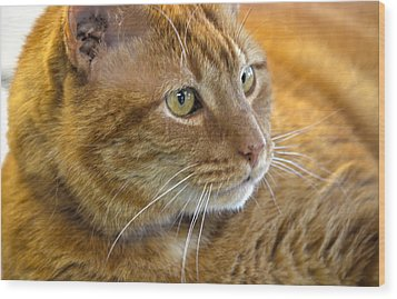 Tabby Cat Portrait Wood Print by Sandi OReilly