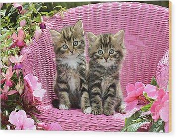 Tabby Kittens Wood Print by Greg Cuddiford
