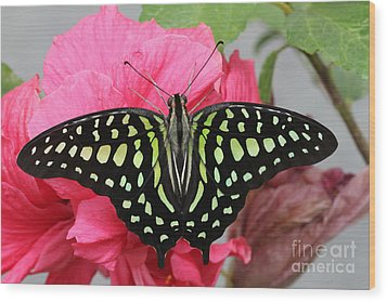 Wood Print featuring the photograph Tailed Jay Butterfly #6 by Judy Whitton
