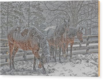 Wood Print featuring the photograph Tails To The Wind by Gary Hall