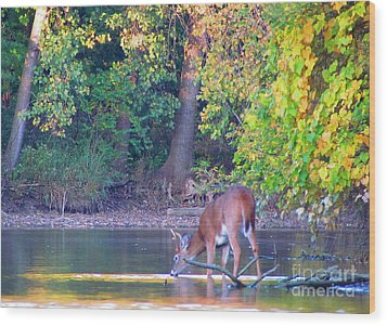 Taking A Drink Wood Print