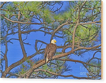 Taking A Nest Break Wood Print by Deborah Benoit