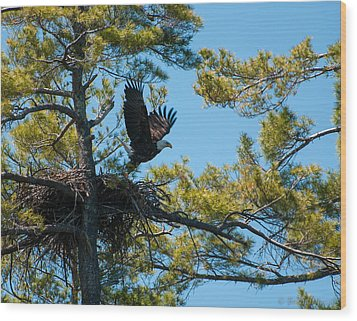 Wood Print featuring the photograph Taking Flight by Brenda Jacobs