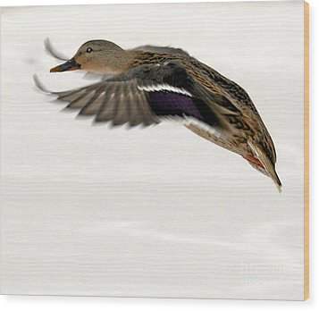 Taking Off Wood Print by John Telfer