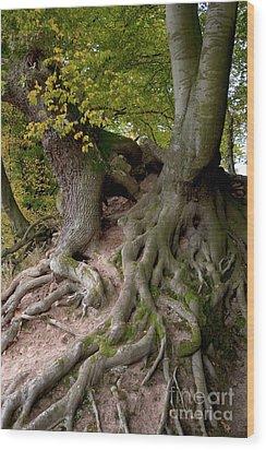 Taking Root Wood Print by Heiko Koehrer-Wagner