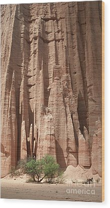 Wood Print featuring the photograph Talampaya Gorge Argentina by Rudi Prott
