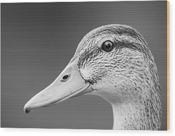 Talk Like A Duck Wood Print